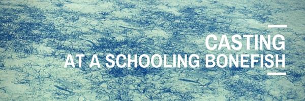 Schooling Bonefish