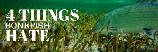 things bonefish hate