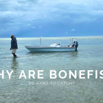 Why Are Bonefish So Hard To Catch