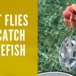 Best Flies to Catch Bonefish
